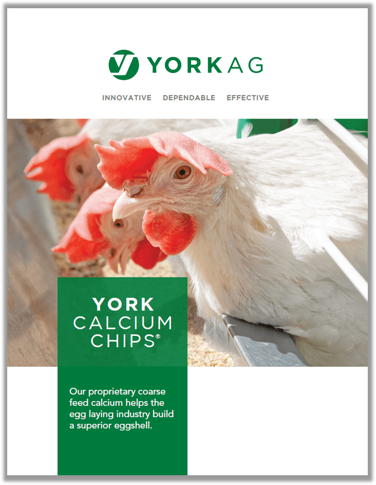 Brochure cover of YORK Calcium Chips