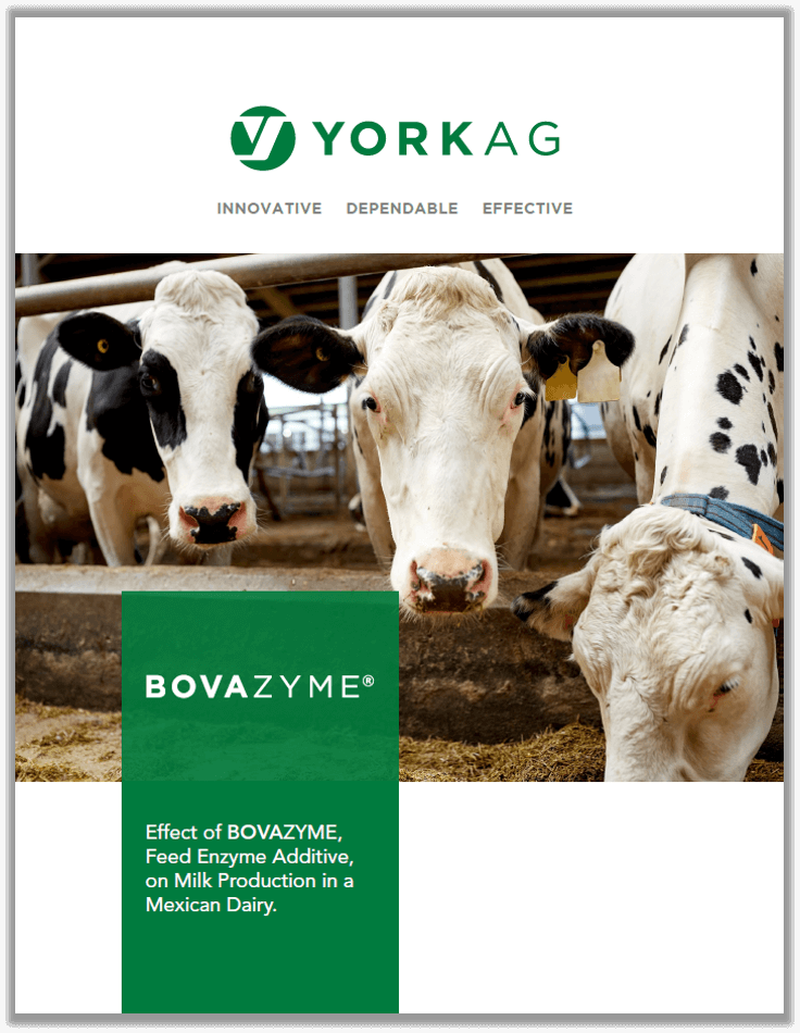 BOVAZYME Trial in Mexican Dairy Facility Brochure Cover