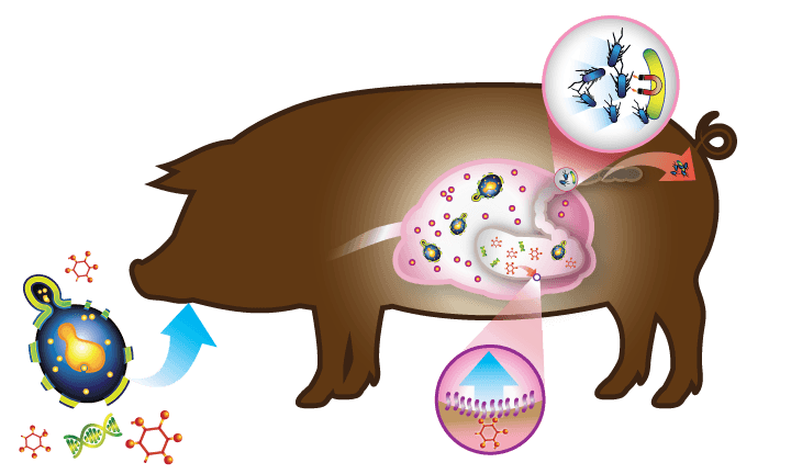 Hilyses, the bionic prebiotic yeast