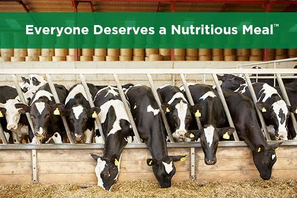 York Ag Penn State Dairy Nutrition Workshop 2021 Thumbnail.jpg