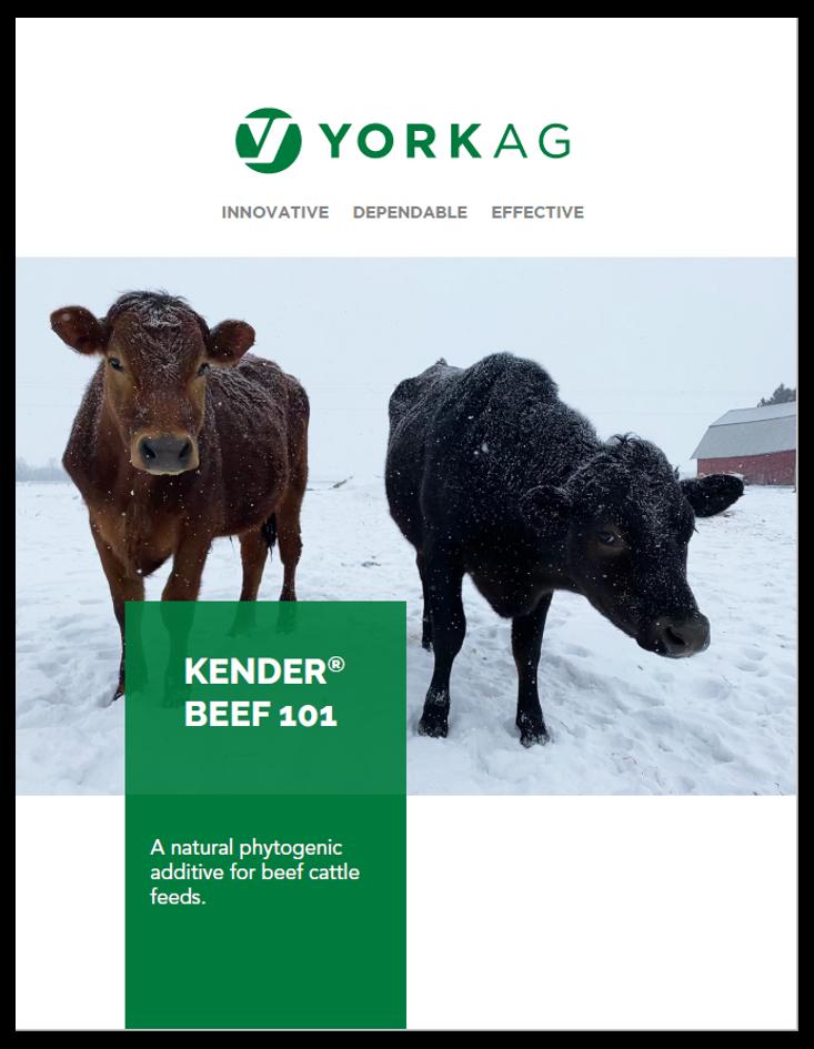 Kender Beef 101 Brochure Thumbnail