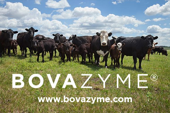 York Ag BOVAZYME Press Release Image 2021.jpg