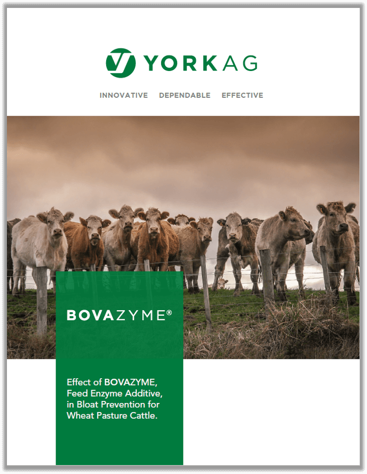 BOVAZYME Bloat Prevention Trial brochure cover
