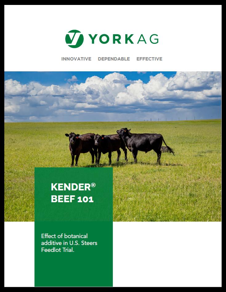 Kender Beef 101 US Steers Feedlot Trial Brochure Thumbnail
