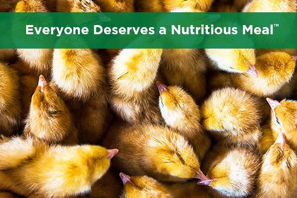 York Ag Everyone Deserves a Nutritious Meal thumbnail.jpg