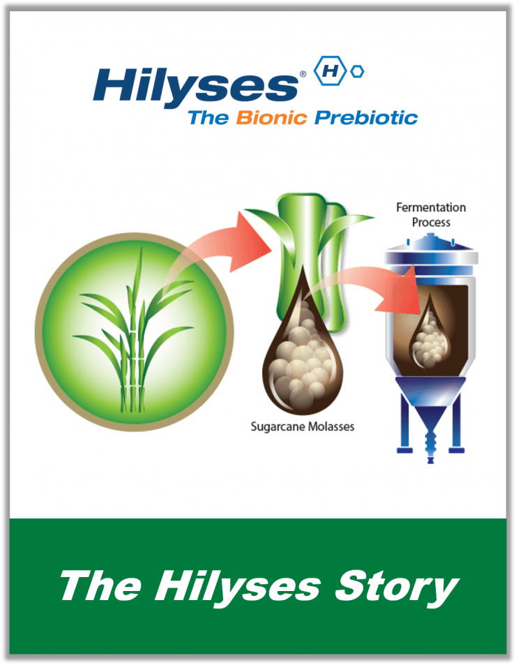 The Hilyses Story